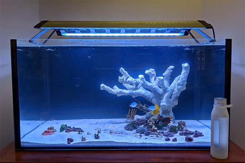 no coralline algae growth why water chemistry nano reef com